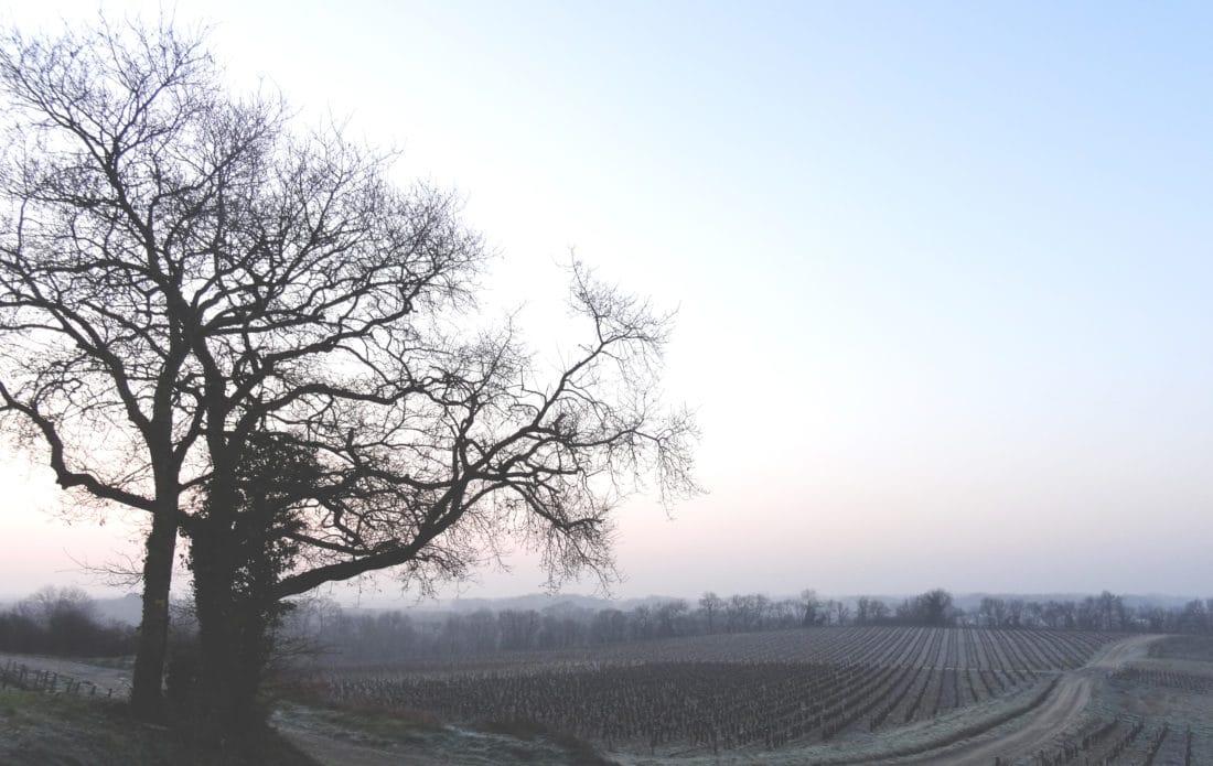 Histoire des Domaines Landron