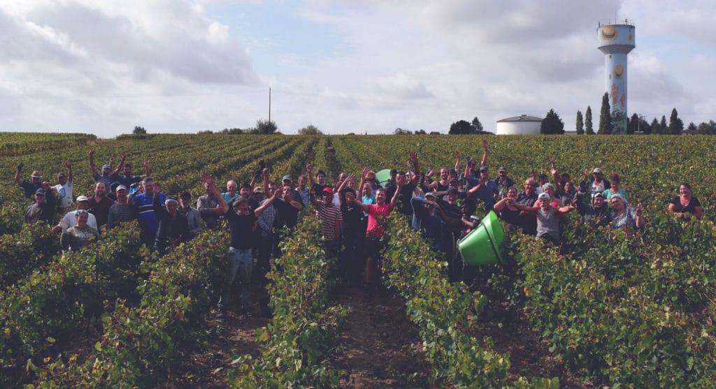 Fin-de-vendanges-2018 - Muscadet Sèvre et Maine Jo Landron