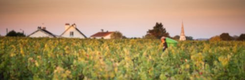 Où trouver nos vins header